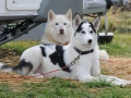 dogs_003