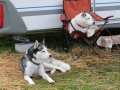 dogs_004