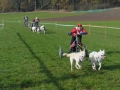 dogs_007