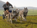 dogs_009