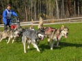 dogs_010