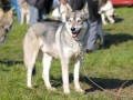 dogs_012