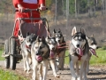 dogs_013