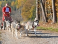 dogs_014