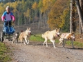 dogs_017