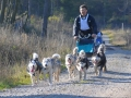 dogs_018