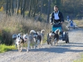 dogs_019
