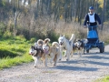 dogs_021