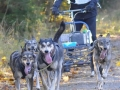 dogs_022