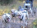 dogs_023