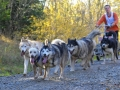 dogs_024