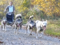 dogs_027