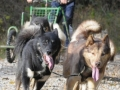 dogs_029