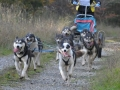 dogs_033
