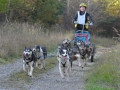 dogs_034