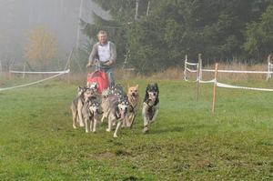dogs_044
