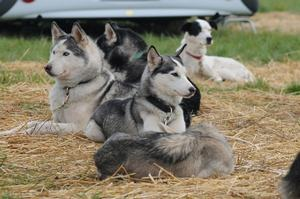 dogs_050