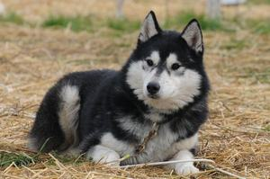 dogs_051